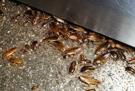 ゴキブリの一日