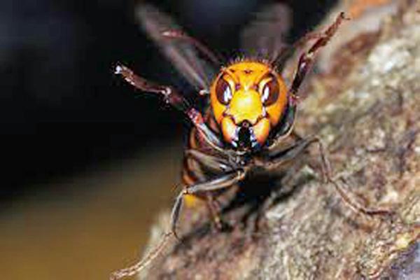 スズメバチの画像 p1_10