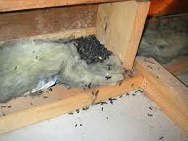 ネズミの画像 p1_30